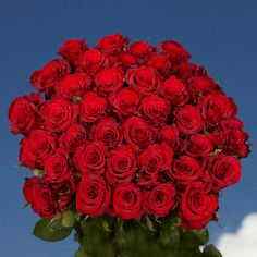 GlobalRose 50 Red Roses - Fresh Cut Long Stems - Flowers For Birthdays, Weddings or Anniversary. Long Stem Flowers, Cut Flowers, Fresh Flowers, Send Flowers, Wedding Flowers, Valentines Flowers, Valentine Gifts, Rose Delivery, Flower Delivery