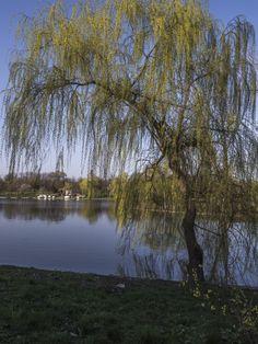 park, lake, trees, color, sky, reflections, water, willow, boats, marina