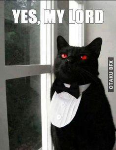 meme kuroshitsuji meme yes my loard meme gato meme otaku meme anime meme mordomo meme japao