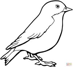 sparrow coloring page from sparrows category select from 28148 printable crafts of cartoons nature animals bible and many more