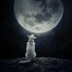 Help Dogs with Images photos surrealistes pour des animaux a adopter 5   Des images surréalistes pour des animaux à adopter   surrealiste Sa...