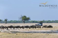 Out in the wilderness with Wilderness Safaris.