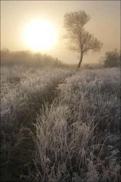Light Frosts | winter, field, sunrise, sun, grass, hoarfrost