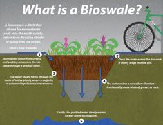 Bioswales are landscape elements designed to remove silt and pollution from surface runoff water. They consist of a swaled drainage course with gently sloped sides (less than six percent) and filled with vegetation, compost and/or riprap Permaculture Design, Permaculture Principles, Runoff Water, Water Water, Water Plants, Rainwater Harvesting System, Water From Air, Drainage Solutions, Water Solutions