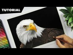 How to Draw an EAGLE with Colors | Tutorial for BEGINNERS - YouTube Eagle Drawing, Guy Drawing, Drawing Lessons, Drawing Tips, Drawing Tutorials, Cartooning 4 Kids, Cartoon Tutorial, Simpsons Drawings, Color Pencil Sketch