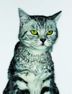 British Vogue cat jewelry by Jenny van Sommers   Flickr - Photo Sharing!