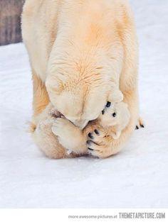 Polar bear mom and cuddly cub Nature Animals, Animals And Pets, Wild Animals, Nature Nature, Wild Nature, Nature Photos, Beautiful Creatures, Animals Beautiful, Majestic Animals