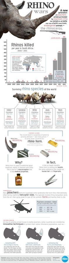 Infographic: Understanding the rhino wars (via MNN - Mother Nature Network)