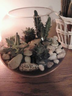 A terrarium made of cacti in a fish tank. I picked up the stones on the beach.