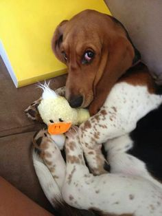 uhhhhhh... this is my toy! not urs! MINE!!