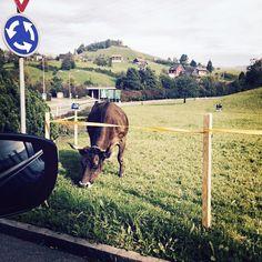 #GuèPequeno Guè Pequeno: Che bella vacca