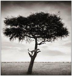 """Excelente colección de fotos de Nick Brandt """"On This Earth a Shadow Falls"""""""