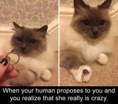 Funny Animal Pictures Of The Day – 23 Pics Funny Animal Memes, Funny Animal Pictures, Cute Funny Animals, Funny Cute, Hilarious Memes, Cute Cat Gif, Cute Cats, Animals And Pets, Baby Animals