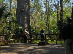 Big Tree Park - abut 10 mins from Lake Mary