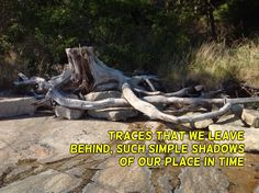 More #traces #ichnology reflections and #haiku #micropoetry #maine