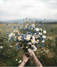 Blue and white floral bouquet photo by Dominika Brudny at Do.- Blue and white floral bouquet photo by Dominika Brudny at Dominika Brudny on Ins Blue and white floral bouquet photo by Dominika Brudny at Dominika Brudny on Ins… – - Colorful Flowers, Wild Flowers, Beautiful Flowers, Flowers Nature, Nature Plants, Boquette Flowers, Spring Flowers, Bunch Of Flowers, Art Nature