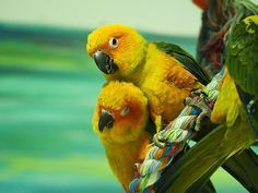 Has your relationship with your bird made a turn for the worst? Press the pause button and learn how to restart your relationship with your pet bird with these tips. Parrot Pet, Parrot Toys, Conure, Autistic Children, Exotic Birds, Colorful Birds, New Tricks, Pet Birds, Your Pet