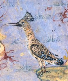 "Hoopoe the master mind! Painting by Habiballah of Sava | ""The Concourse of the Birds"", Folio 11r from a Mantiq al-tair (Language of the Birds) 