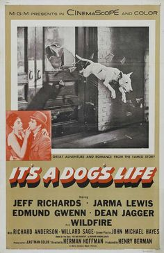 best movie and dog