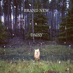 Brand New has been one of my all-time favorite bands for years. I never get tired of their music!