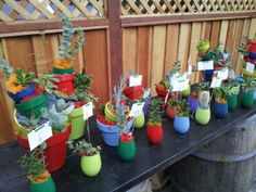 A Dr. Suess succulents forest by Urban Succulent comes to life for baby shower. www.etsy.com/shop/urbansucculent 450 Dondee Way at Rockaway Beach, Pacifica, CA