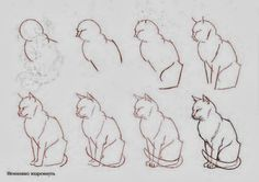 Diy Projects: How To Draw Cats