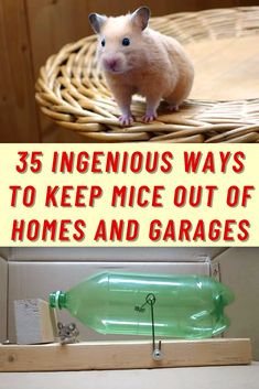 Mice are one of those pests that no one wants to end up with in their home. Not only are they very unsanitary leading to the spread of various types of diseases, but they also can do a lot of damage. Between the burrowing in the walls, chewing on cords, and leaving their droppings scattered around, you'll definitely want to get rid of them.