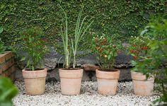 Vasos de cerâmica têm capim-limão e variedades de pimenta. Ficam próximos à parede forrada de unha-de-gato