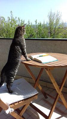 La libreria dei gatti