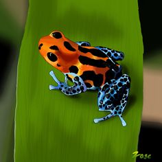 Zoge: poison dart frog Poison Dart Frogs, Digital, Drawings, Animals, Animales, Animaux, Dart Frogs, Sketches, Animal