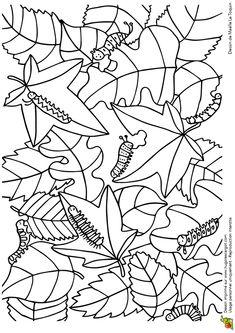 Coloriage cache cache feuilles chenilles sur Hugolescargot.com - Hugolescargot.com