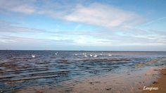I Sea Swans  #Scotland #Sea #Swans