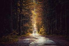 """Foto von Meister T: """"Wandern im Wald"""""""