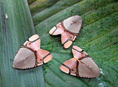 Trio of noctid moths (Ramadasa pavo ) by Linda Alisto.