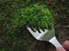 moss collecting #mossgardenindoor