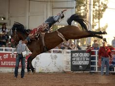 Taylor Price said Carr Pro Rodeo's Dirty Jacket was the best bucking horse he's ever been on. The two matched moves for 88 points for Price to win the bareback riding title at the West of the Pecos Rodeo, one of six events this year that Dirty Jacket has guided cowboys to the top score. (ROBBY FREEMAN PHOTO)