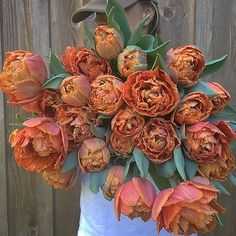 Yesterday I picked up bulbs and corms from @floretflower Today I am prepping beds for their Winter sleep. Tucking in thosebrings me happiness. Erin I can't thank you enough for your support and kindness. 'Sensual Touch' Tulips #floretbulbs #flowerfarmer