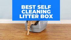 Best Self Cleaning Litter Box Self Cleaning Litter Box, Tidy Cats, Best Self, Cool Cats, Your Pet, Pets, Top, Crop Shirt, Shirts