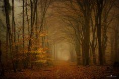 Wood B by Lars van de Goor on 500px
