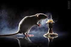 крыски