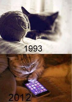 SMartphone Cats.