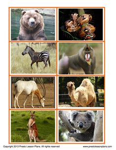 Zoo Animals Matching Game is a fun activity for preschoolers to learn about  zoo animals through the comparison of a variety of animals.