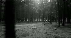 gif nature black and white