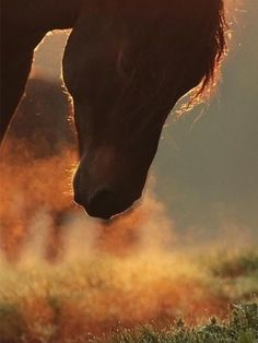 All The Pretty Horses, Beautiful Horses, Animals Beautiful, Cute Animals, Horse Feed, Wild Spirit, Wild Mustangs, Picture Story, Cute Animal Pictures