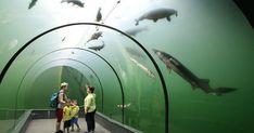 Plánujete prázdninový výlet a chcete zažiť niečo výnimočné? Tak potom zamierte do moravskej obce Modrá neďaleko Uherského Hradišťa. Pod hladinou tamojšieho rybníka nájdete unikátnu expozíciu Živá voda. Zo skleného tunela pod vodou môžete sledovať, ako okolo vás plávajú obrovské ryby. Gate, Sci Fi, Clouds, Places, Animals, Travelling, Pocket, Science Fiction, Animales