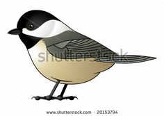 Black Capped Chickadee (Vector Available) - stock photo