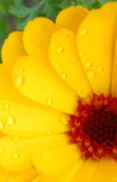 yellow flower   Very cool photo blog