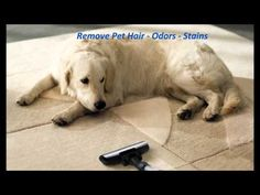 A Plus Carpet Cleaning Houston Ph: (281) 438-4668 Carpet Cleaning Houston Reviews