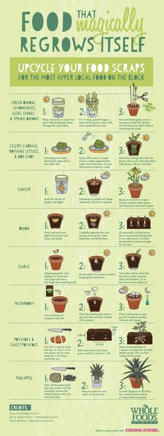 Personal Life: Along with my love for house plants, I also love growing vegetables. This is a great way to upcycle your old food scraps and be a little more sustainable with your food. Herb Garden, Garden Plants, Vege Garden Ideas, Micro Garden, Plants Indoor, Organic Gardening, Gardening Tips, Sustainable Gardening, Organic Farming