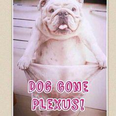 Warning! Plexus may cause you to have to buy a new wardrobe! #PlexusSlim  Click here http://www.shopmyplexus.com/kellyfloyd